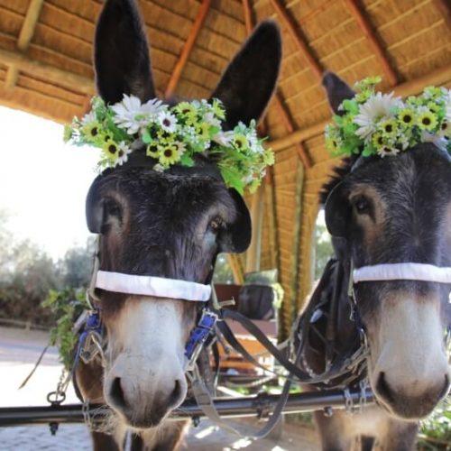 ZP Donkey Cart 1