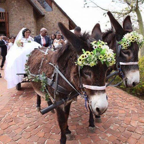 ZP Donkey Cart 2