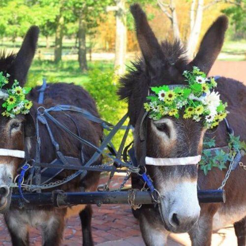 ZP Donkey Cart 3